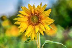 Photo Little sun by Victor Zavidiya on 500px