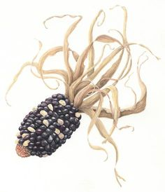 Irene Messina | American Society of Botanical Artists