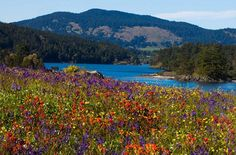 Yellow Island, San Juan Islands, Washington  There's no shortage of island adventures in Washington's San Juans, but few offer the pristine beauty of Yellow Island. The 11-acre isle is a Nature Conservancy preserve, and since it was never used for cattle grazing, it retained its rich diversity of plant life—including more than 50 species of wildflowers. And if you want an exceptional wildlife sighting, you're in the right place: Bald eagles, harbor seals, mink, river otters, orcas, and