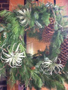 air plant wreath