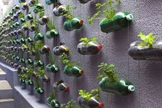Vertical garden with recycled pet bottles. It allows plants to extend upward rather than grow along the surface of the garden. Doesn't take a lot of space and look so beautiful at the same time.