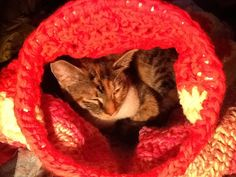 Scrap yarn cat bag. She loves it. ^_^