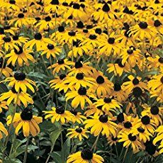 Flower Gardening Design 10 of the Longest Flowering Perennials for your Garden - With a little planning, your garden can offer color from early spring to late autumn. Here are 10 of the longest flowering perennials for flower gardens.