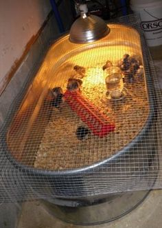 A brooder made from a 150 gal stock tank - it cost me about $60 new at a farm store.