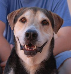 Ryder, very kind boy recovering from severe depression, triumphantly debuting for adoption today at Nevada SPCA.... http://nevadaspca.blogspot.com/2014/08/like-you-i-am-emotional-being-too.html