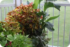 33 Shades of Green: Container Gardening