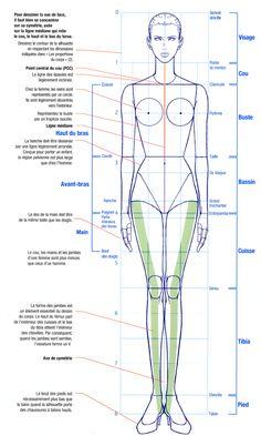 mannequin femme et proportions