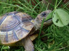 #Schildkröte,#Tierbabys,#Tierfotografie