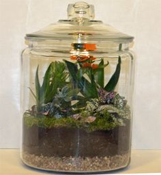 Finished Terrarium with lid