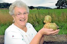 Dorothea Clinton who dug up a potato in the shape of a duck. Dorothea Clinton will be having 'Quack-et Potato' for dinner after digging up this funny-looking potato Sep 13, 2013. The 73-year-old, of Peaton, near Ludlow, thought it bore an uncanny resemblance to a duck, and wanted to show of the funny looking vegetable.