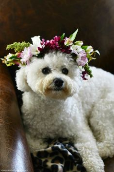 How to Make a Flower Crown for You or Your Pup! | ©homeiswheretheboatis.net #flowers #dogs #bichonfrise #DIY