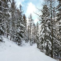 【bomi_aiko】さんのInstagramをピンしています。 《#magnifique #ski #スキー #스키 #station #vars #alpes #alps #알프스 산맥 #alpen #アルプス山脈 #neige #雪 #가루눈 #snow #forest #森 #숲 #beautifullife #peace #trip #travel #nature #自然 #자연 #france #프랑스 #フランス》