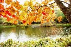 #HokkaidoUniversity #Fall #Autumn #BeautifulScenery