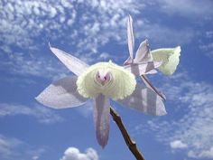 Lucious Lotus