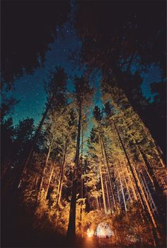 star filled sky through trees....
