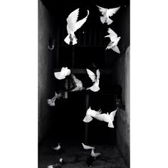 Should be free.Fly.black & white #photography