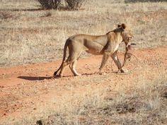 taken  at  samburu  National  Reserve  kenya
