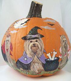 Yorkie pumpkin..thought you'd love this, @Maria Cirincione !