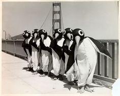 Penguin Chorus