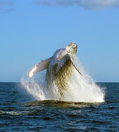 whale watching tours cabo san lucas