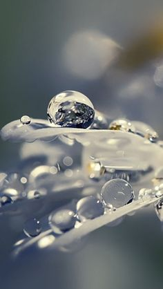 Ideas For Photography Nature Water Morning Dew Image Nature, All Nature, Nature Water, Dew Drops, Rain Drops, Water Photography, Amazing Photography, Photography Flowers, Levitation Photography