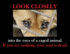 117 Best Animal Cruelty Captivity Confinement Images Animal