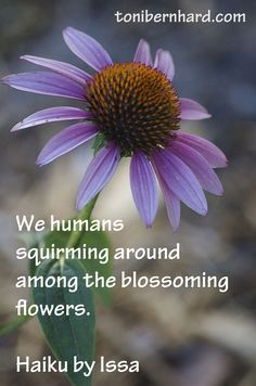we humans squirming around among the blossoming flowers. -haiku by Issa