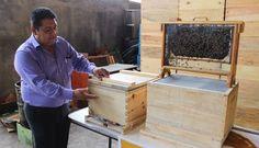 Las abejas latinoamericanas trabajan para alimentar a la humanidad | Internacional | EL PAÍS