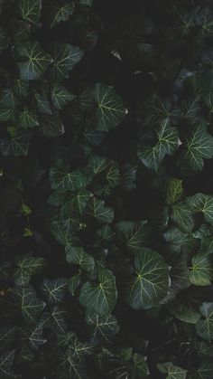 12 Botanical iPhone Xs Max Wallpapers | Preppy Wallpapers