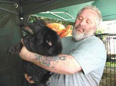 gigantic lagomorph Large Rabbits, Cats, Animals, Gatos, Animales, Animaux, Animal, Cat, Animais