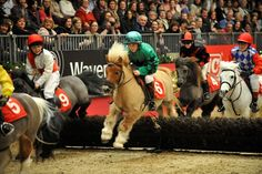z- Shetland Pony Grand National, AKA- Cutest Thing in Equestrian World All The Pretty Horses, Beautiful Horses, Animals Beautiful, Horse Girl, Horse Love, Miniature Ponies, Tiny Horses, Cute Ponies, Horse Photos