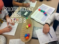 Cells & Homeostasis: Egg Lab Data Day 4