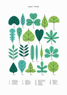 Etsy の A3 Leaf Types print by watersounds