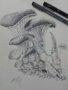 Cogumelos e mais cogumelos. ..