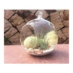 4 Glass Orb Terrarium Kit With Ionantha Tillandsia Air Plant (1.075 RUB) ❤ liked on Polyvore featuring home, home decor, grey, home & living, home décor, ornaments & accents, grey home decor, glass globe, glass home decor and sea fan