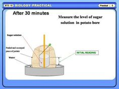 Physics Learn: Study of Osmosis by Potato Osmometer, Biology practical std 11 & 12