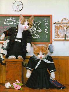 なめ猫画嬢♪ - 詳細表示 - sayakaの画嬢 - Yahoo!ブログ