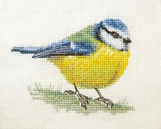 BLUE TIT ~ Garden Bird ~ Full counted cross stitch kit with all materials