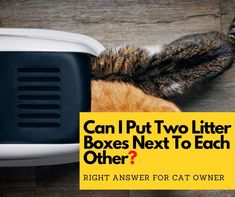 Can I put two litter boxes next to each other? – This is a common question that will show up in the head of almost any cat owners when they find their cats do not urinate and defecate in the same litter tray. Best Cat Litter, Litter Box, Cool Cats, I Can, Tray, Boxes, Canning, This Or That Questions, Sand Pit