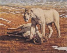 American lion, Panthera Atrox  stands over a Dall ram