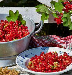 Tips för odling av vinbär | Wexthuset Flower Power, Salsa, Mexican, Ethnic Recipes, Tips, Flowers, Summer, House, Food