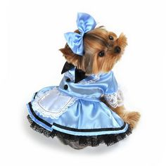 My baby Alice could wear Fantasy Alice Dog Costume for halloween