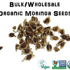 Drumstick Tree Moringa oleifera Seeds Sacred Herbs and | Etsy Benefits Of Moringa Seeds, Health Benefits, Banana Cinnamon Tea, Natural Supplements For Depression, Herbal Remedies For Anxiety, Green Tea Smoothie, Best Herbal Tea, Weight Loss Herbs, Grape Seed Extract
