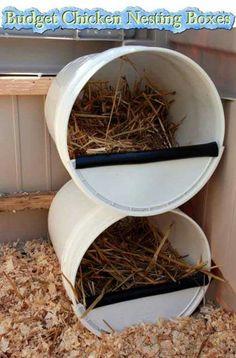 Chicken nest idea