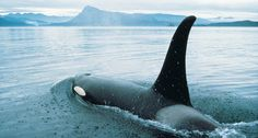 Whale Watching | British Columbia | Destination BC - Official Site