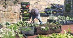 Horta inteligente é ideal para quem tem pouco espaço e tempo