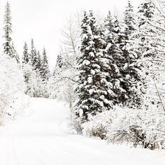 """upknorth: """" The antidote to holiday madness. Escape the chaos down winter backroads. Epic shot by (at Kananaskis Country) """" Winter Christmas, Holiday, Out Of The Dark, Silver Blonde, Air B And B, Get Outdoors, Time Of The Year, Wonderful Time, How To Look Pretty"""