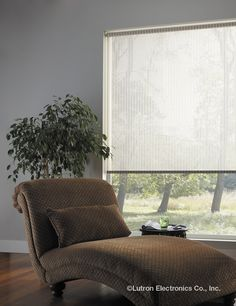 Over time, the sun's rays can damage hardwood floors and furnishings. Shades can conveniently block those rays and protect your valuables. Hardwood Floors, Flooring, Roller Shades, Window Treatments, Windows, Curtains, Lighting, Fabrics, Touch