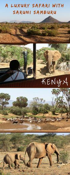 A luxury safari in the Samburu, Kenya, with Saruni Samburu. Here's what it's like to go on game drives in the Samburu with warriors!