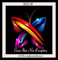 Download 86 Best Beautiful Butterflies from Heaven images ...